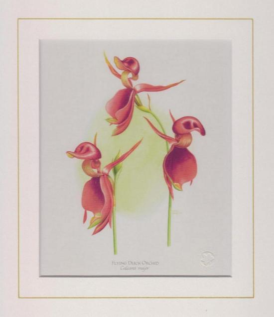 Flying Duck Orchid Mounted Print