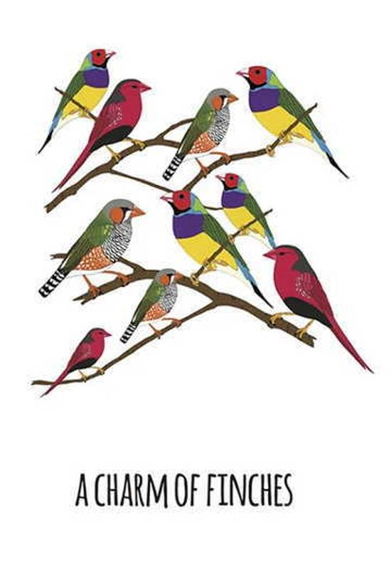 Print - Charm of Finches - A4