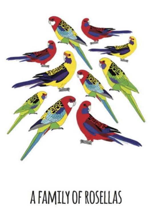 Print - Family of Rosellas - A4