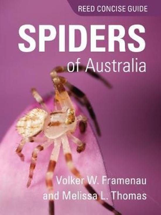 Reed Concise Guide Spiders of Australia