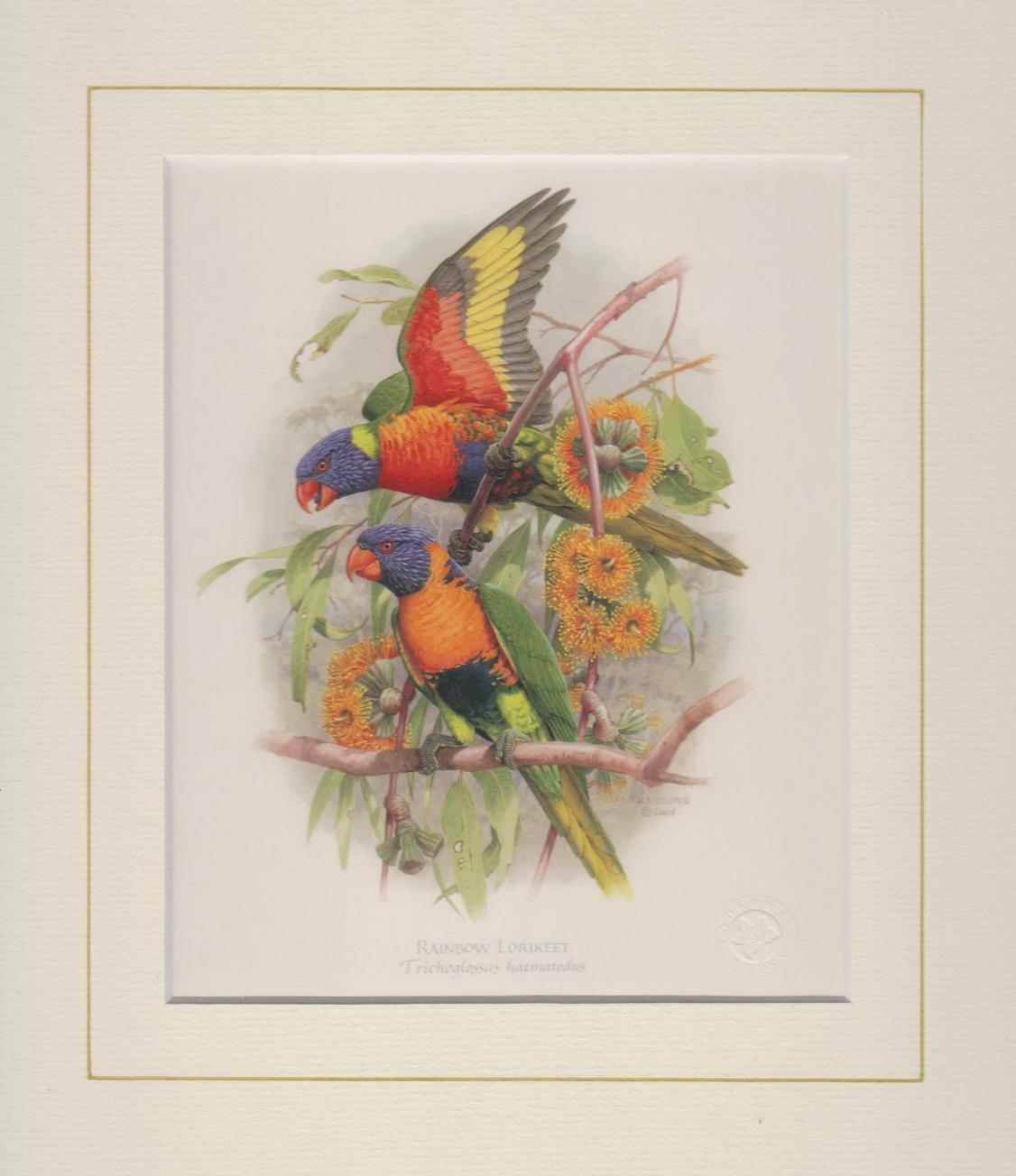 Rainbow Lorikeet Mounted Print
