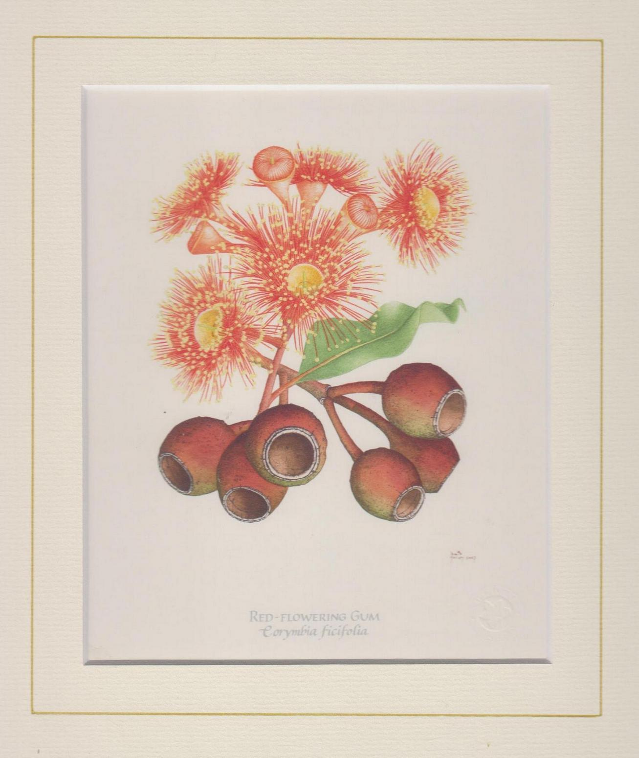 Red Flowering Gum Mounted Print