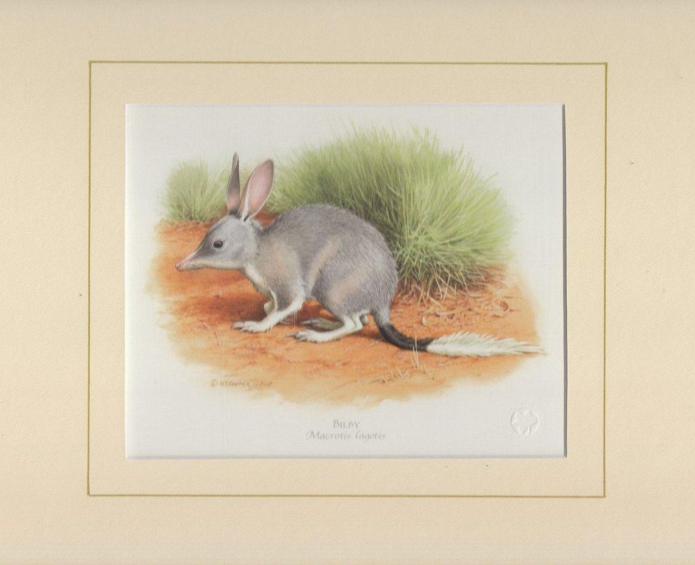 Bilby Mounted Print
