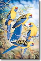 Card - Australian Yellow Rosellas And Wattle