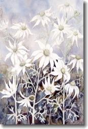 Card - Australian Flannel Flowers
