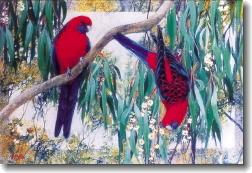 Card - Crimson Rosellas and Gum Blossom