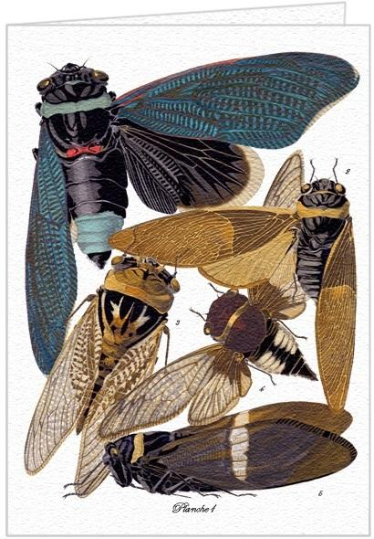 Planche 1 - Cicadas - Greeting Card