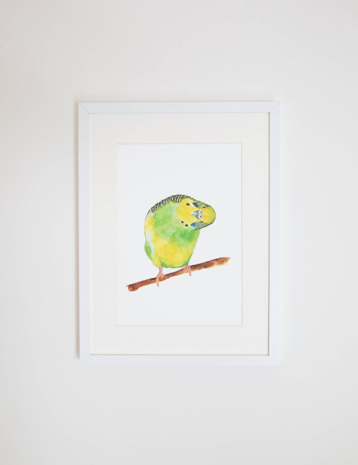 Print - A4 - Betty the Budgie - Unframed