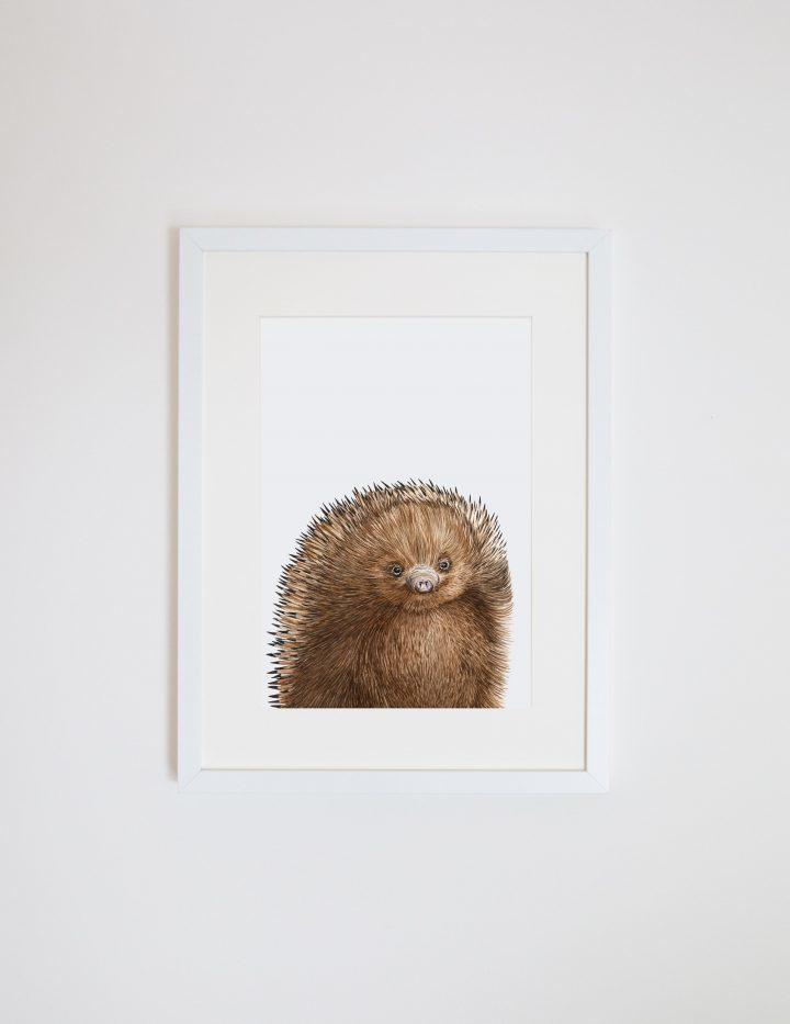 Print - A4 - Eddie the Echidna - Unframed
