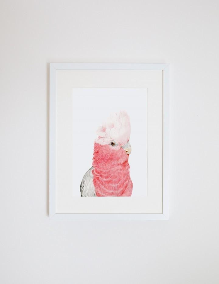 Print - A3 - Gary the Galah - Unframed
