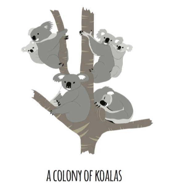 Print - Colony of Koalas - A4
