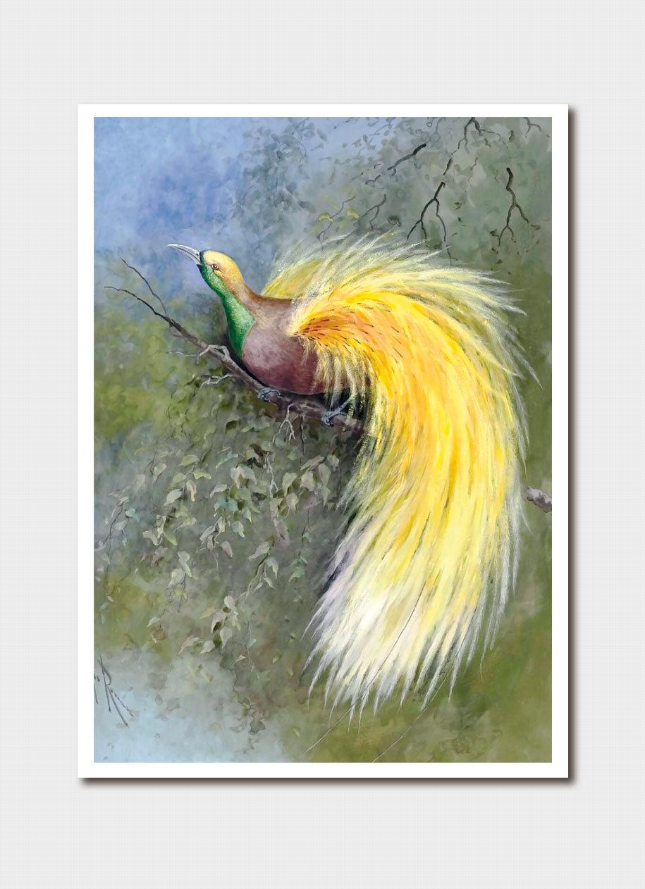 Card - Yellow-Plumed Bird of Paradise