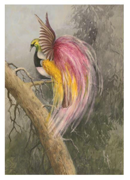 A4 Print - The Empress of Germany's Bird of Paradise