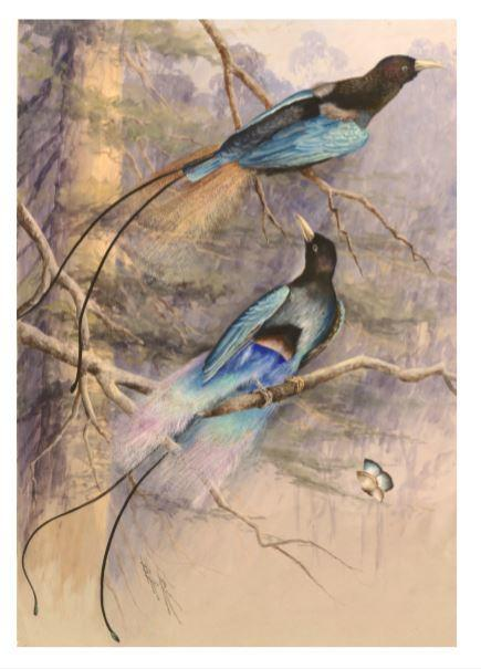 A4 Print - Blue Birds of Paradise