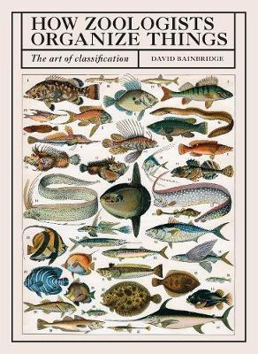 How Zoologists Organize Things - The Art of Classification