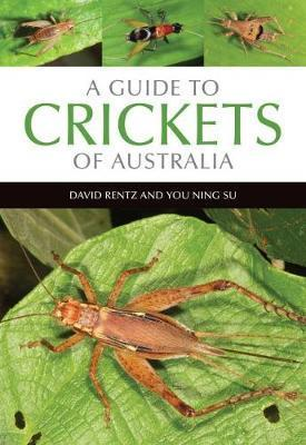 Guide to Crickets of Australia
