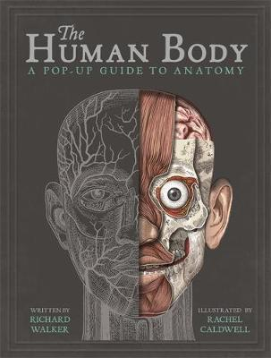 The Human Body - A Pop-Up Guide to Anatomy