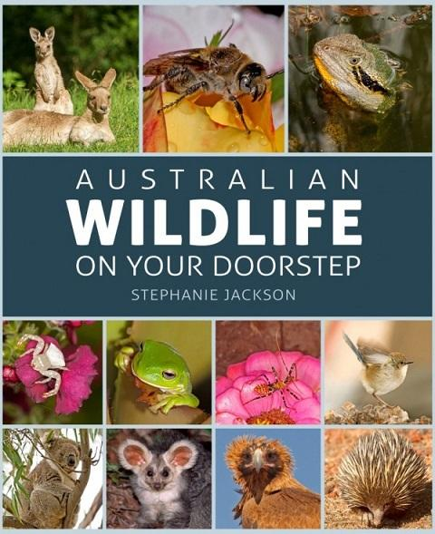 Australian Wildlife On Your Doorstep