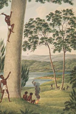 Treasures Gallery Merchandise - Postcard - Plate 2: Aborigine Climbing a Tree - NL21055