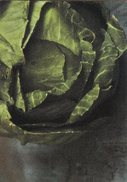 Lettuce - Masha Zaric Greeting Card