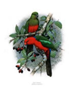 King Parrot Greeting Card - Nokomis