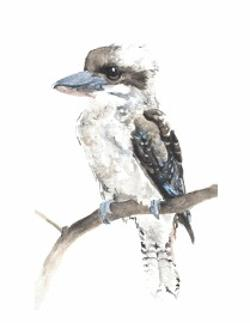 Card - Laughing Kookaburra