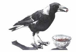 Magpie Thief Greeting Card