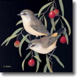Small Card - Yellow-Rumped Thornbills and Quandong