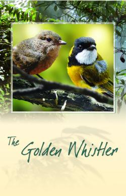 Card - Golden Whistler Bird Call