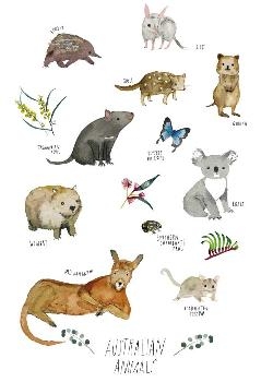 Card - Australian Animals
