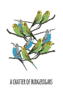 Print - Chatter of Budgerigars - A4