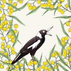 Card - Squawking Magpie and Wattle