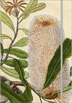 Journal: Gostelow, 29024 - Banksia serrata