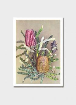 Card - Menzies Banksia
