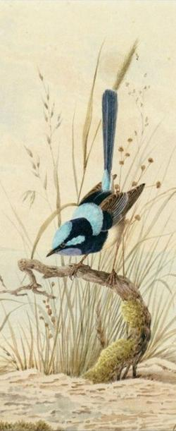 Bookmark - Blue Wren