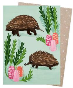Card - Short-beaked Echidnas
