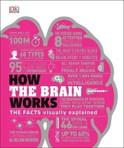 How the Brain Works: The Facts Visually Explained