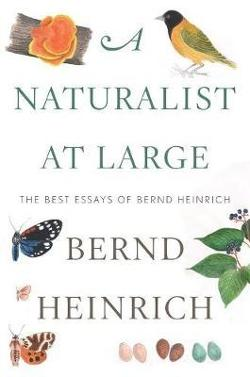Naturalist at Large - The Best Essays of Bernd Heinrich