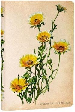 Notebook, Painted Botanicals Woodland Daisies, Mini Lined