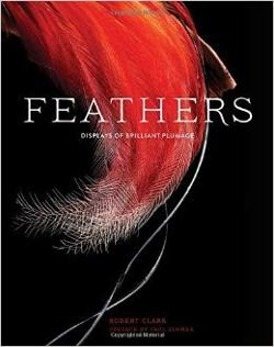 Feathers - Displays of Brilliant Plumage