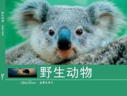 Panoramic Gift Wildlife Chinese (Mandarin) Edition
