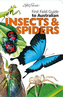 First Field Insects and Spiders